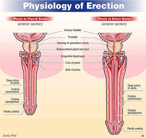 férfi erekció stimulálva
