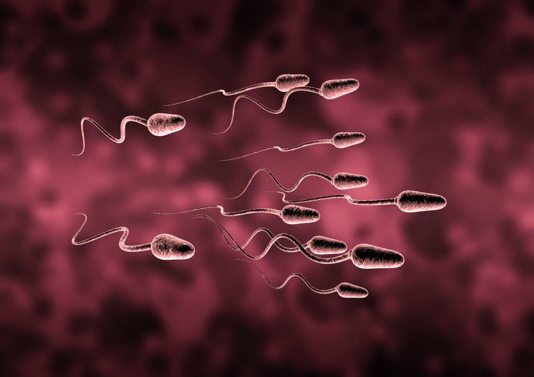spermiumszam-novelese